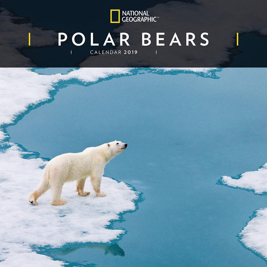 national geographic  u0026 39 polar bears u0026 39  2019 wall calendar
