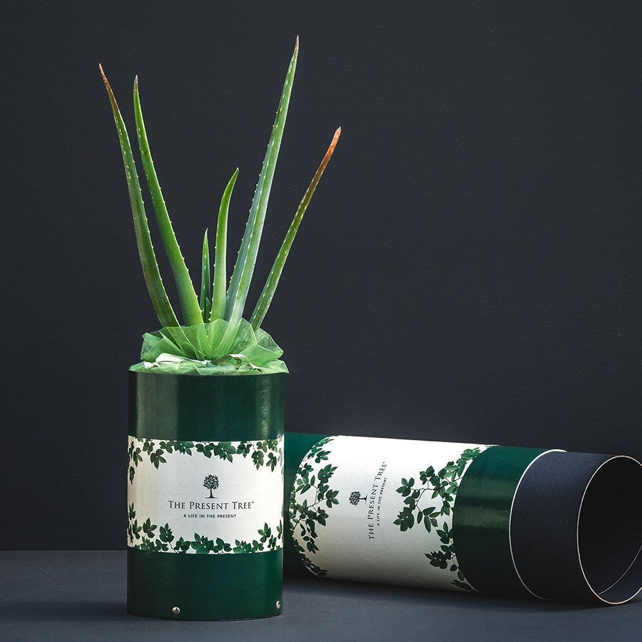 The Present Tree Organic Aloe Vera Gift