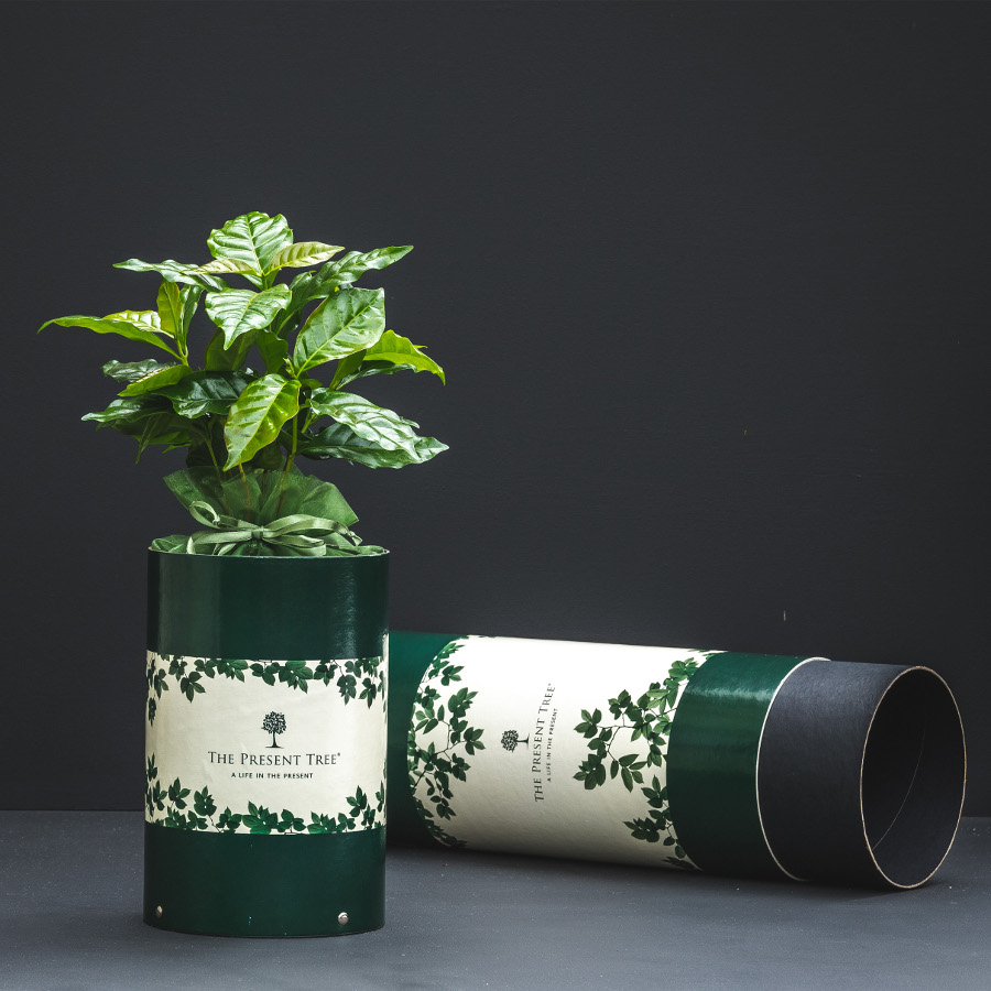 The Present Tree Coffee Tree Gift