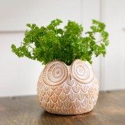 Owl Terracotta Planter