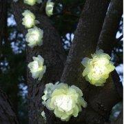 Solar Powered White Roses String Lights - 10