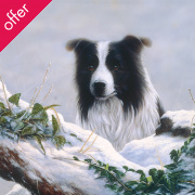 Border Collie Christmas Cards - Pack Of 6