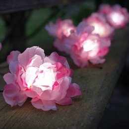 Solar Powered Pink Roses String Lights - 10 test