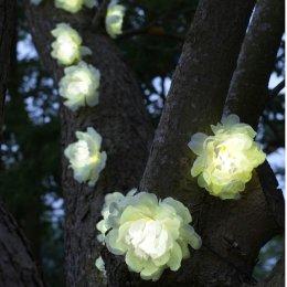 Solar Powered White Roses String Lights - 10 test