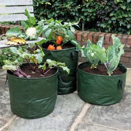Vegetable Planters Pack of 3