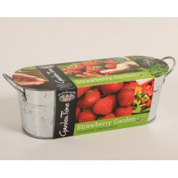 Mr Fothergills Garden Time Windowsill Kit - Strawberry