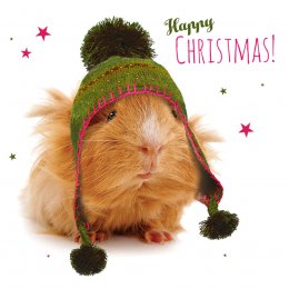 Cosy Guinea Pig Christmas Cards - 10 Pack