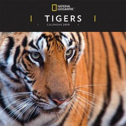 National Geographic Tigers 2019 Wall Calendar
