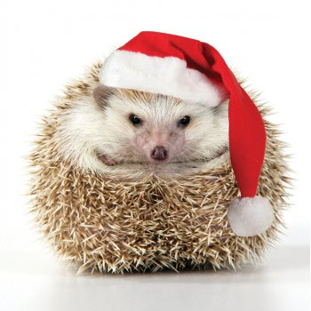 Santa Hat Hedgehog Charity Christmas Cards - Pack of 10