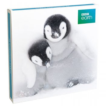 BBC Earth Emperor Penguins Christmas Cards - Pack of 12