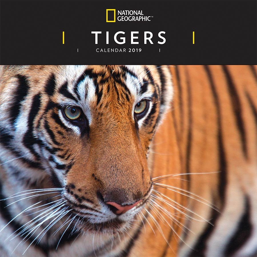National Geographic Tigers 2019 Wall Calendar National Geographic