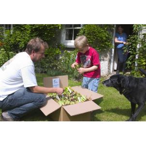 Image of Instant Windowbox Vegetable Garden