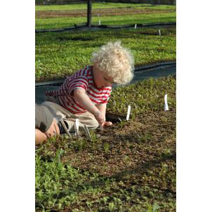 Image of Instant Childrens Vegetable Garden